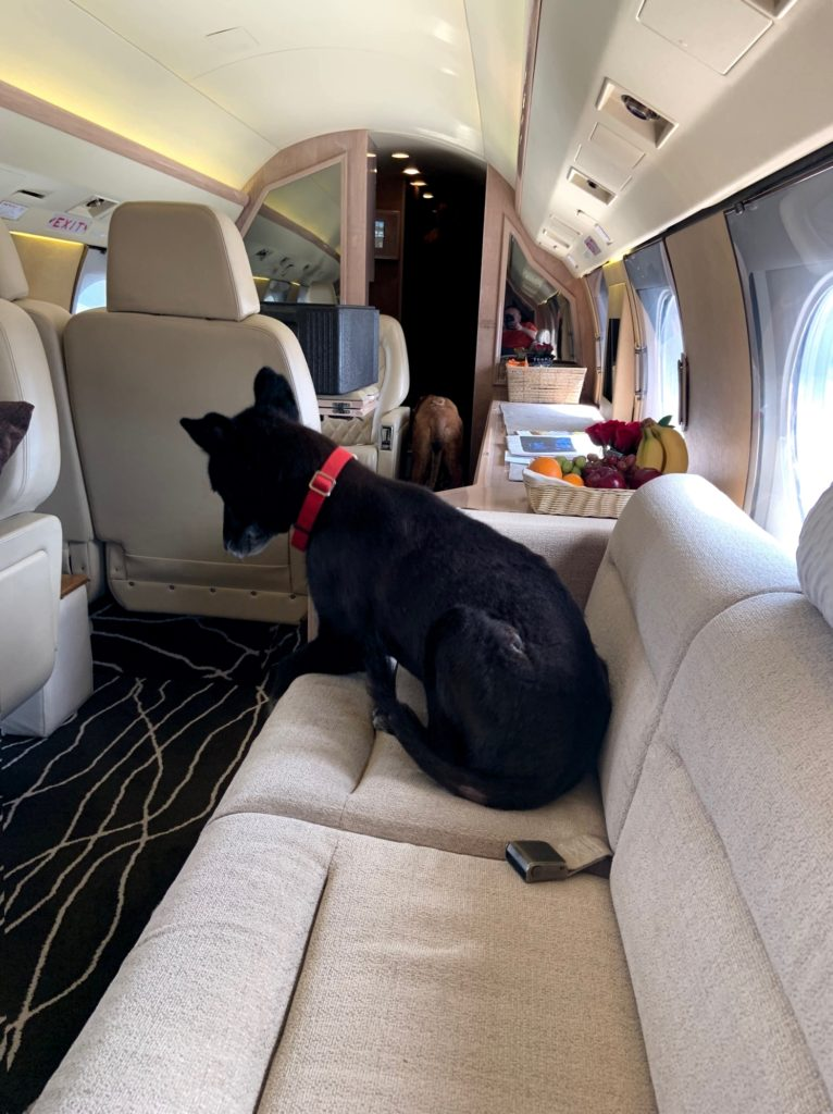 Flying Private Jets with Dogs