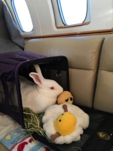 Animals Private Jets